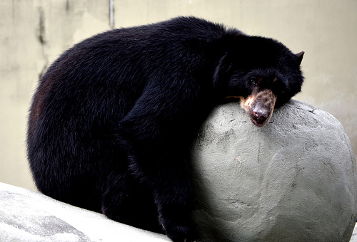 How to Be Productive When You'd Rather Be Hibernating