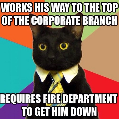 Workplace Lulz: When Your Career Is One Big Cat Meme