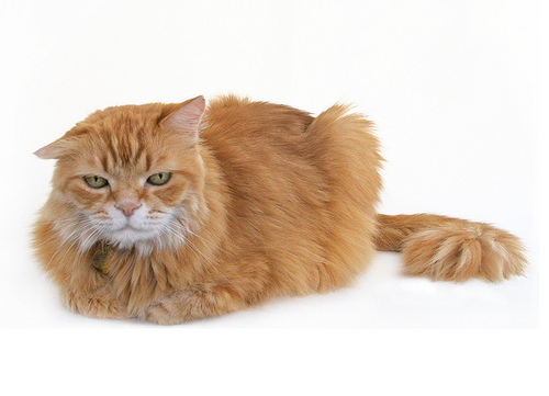 cranky cat