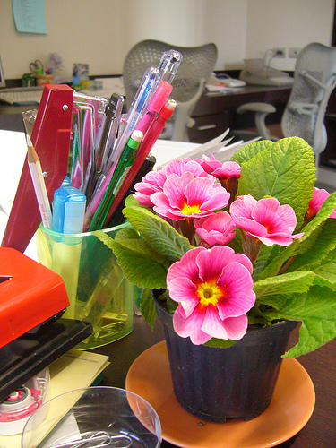 Brighten Up Your Office to Improve Your Mood