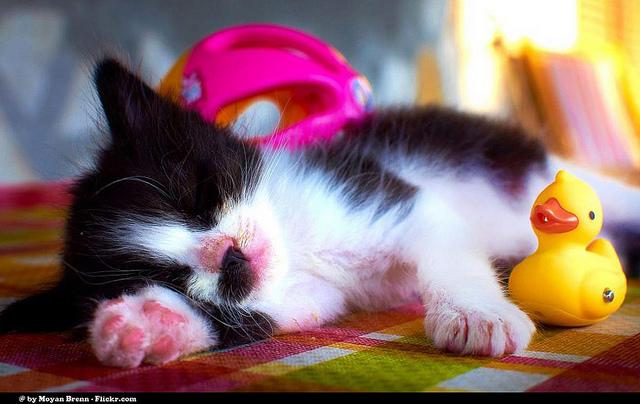 Sleep More, Work Better
