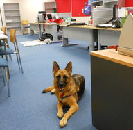 Want to Bring Your Dog to Work? Here's How to Convince the Boss