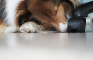 Should Your Company Allow Office Dogs?